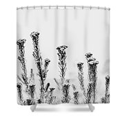African Bushland-black And White Shower Curtain