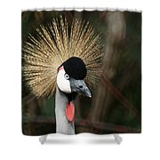 African Crowned Crane 1 Shower Curtain