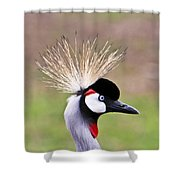 African Crowned Crane Portrait Shower Curtain