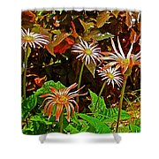 African Daisies In Aswan Botanical Garden On Plantation Island In Aswan-egypt Shower Curtain