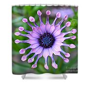 African Daisy - Square Format Shower Curtain