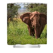 African Desert Elephant Shower Curtain