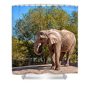 African Elephant 2 Shower Curtain