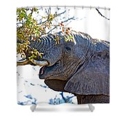 African Elephant Browsing In Kruger National Park-south Africa Shower Curtain