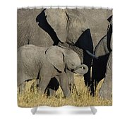 African Elephant Calf With The Herd Shower Curtain