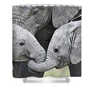 African Elephant Calves Loxodonta Shower Curtain