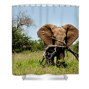 African Elephant Carying A Tree With Its Trunk Shower Curtain