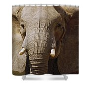 African Elephant Close Up Amboseli Shower Curtain