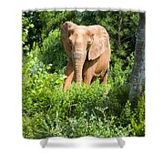 African Elephant Coming Through Trees Shower Curtain