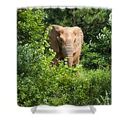 African Elephant Eating In The Shrubs Shower Curtain