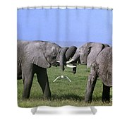 African Elephant Greeting Endangered Species Tanzania Shower Curtain