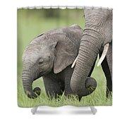 African Elephant Juvenile And Calf Kenya Shower Curtain
