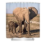 African Elephant Mother And Calf Shower Curtain