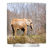 African Elephant On A Hill Shower Curtain