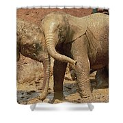 African Elephant Orphans Playing In Mud Shower Curtain