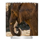 African Elephant Profile Shower Curtain