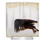 African Fish Eagle In Fligh Shower Curtain by Perla Copernik
