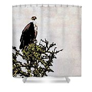African Fish Eagle Shower Curtain by Perla Copernik