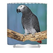 African Gray Parrot Shower Curtain