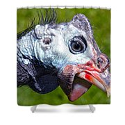 African Guinea Shower Curtain