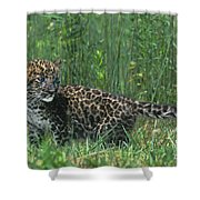 African Leopard Cub In Tall Grass Endangered Species Shower Curtain