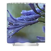 African Lilies  Shower Curtain
