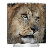 African Lion #5 Shower Curtain