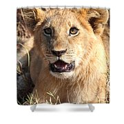 African Lion Cub Resting Shower Curtain