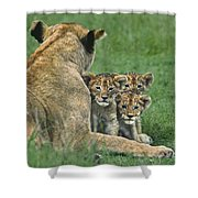 African Lion Cubs Study The Photographer Tanzania Shower Curtain