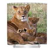 African Lioness And Young Cubs Shower Curtain