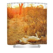 African Mammals Shower Curtain
