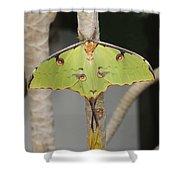 African Moon Moth Shower Curtain
