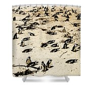 African Penguins Shower Curtain by Oliver Johnston
