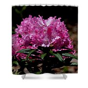 African Pink Shower Curtain