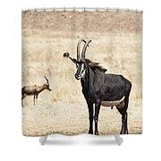 African Plains V2 Shower Curtain