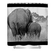 African Safari Elephants 3 Shower Curtain