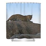 African Safari Leopard 1 Shower Curtain