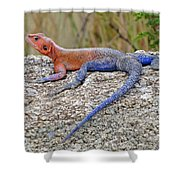 African Safari Lizard Shower Curtain