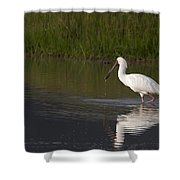 African Spoonbill   #0202 Shower Curtain