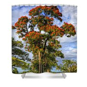 African Tulip At Liliuokalani Park Shower Curtain