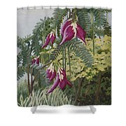 African Tulip Tree Shower Curtain