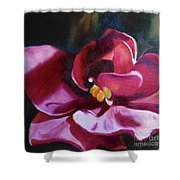 African Violet In The Light Shower Curtain