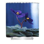 African Violet Shower Curtain