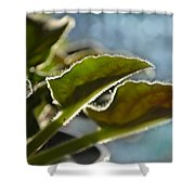 African Violet Leaves With Bokeh   Shower Curtain