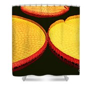 African Water Lilly Platters Shower Curtain