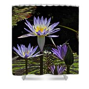 African Waterlily Dazzle -- Plus Dragonfly Shower Curtain