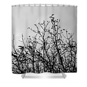 After The Fall Shower Curtain