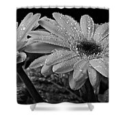 After The Rain Bw Shower Curtain