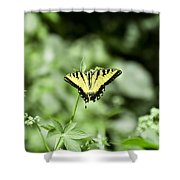 Afternoon Butterfly Shower Curtain
