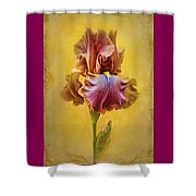 Afternoon Delight - 2 Shower Curtain